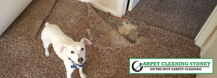 Pet Damage Carpet Repair Services